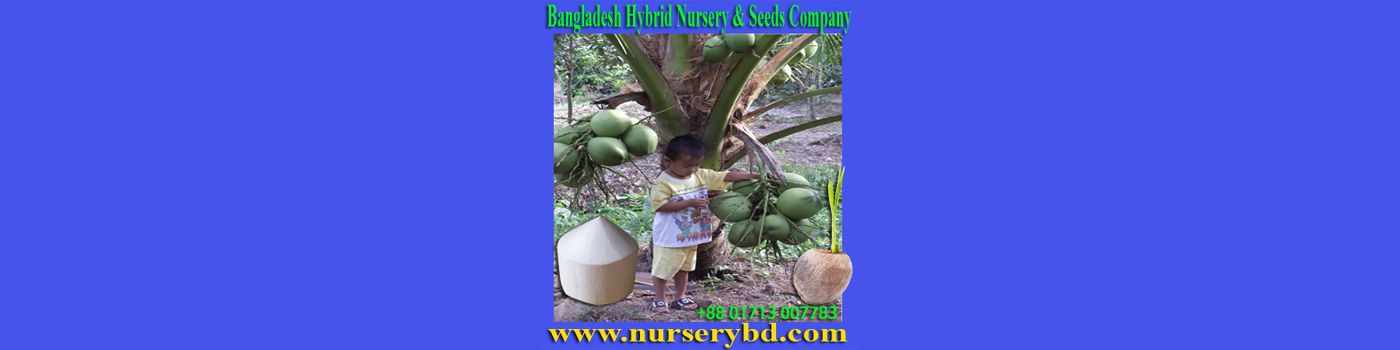 Aromatic Coconut Seedling Plant, Red Aromatic Coconut Seedling Plant, Green Aromatic Coconut Seedling Plant, Hybrid Coconut Seedling Plant, Red Hybrid Coconut Seedling Plant, Green Hybrid Coconut Seedling Plant, Xiem Coconut Seedling Plant, Red Xiem Coconut Seedling Plant