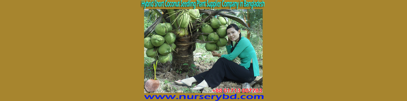 Vietnamese Coconut Tree Importer Company in Bangladesh, Vietnamese Coconut Tree Importer Supplier Company in Bangladesh, Vietnamese Coconut Tree Supplier Company in Bangladesh, Vietnamese Green Siem Coconut Tree Supplier Company in Bangladesh, Green Siem Coconut Tree Supplier Company in Bangladesh, Vietnamese Coconut Tree Importer Nursery in Bangladesh