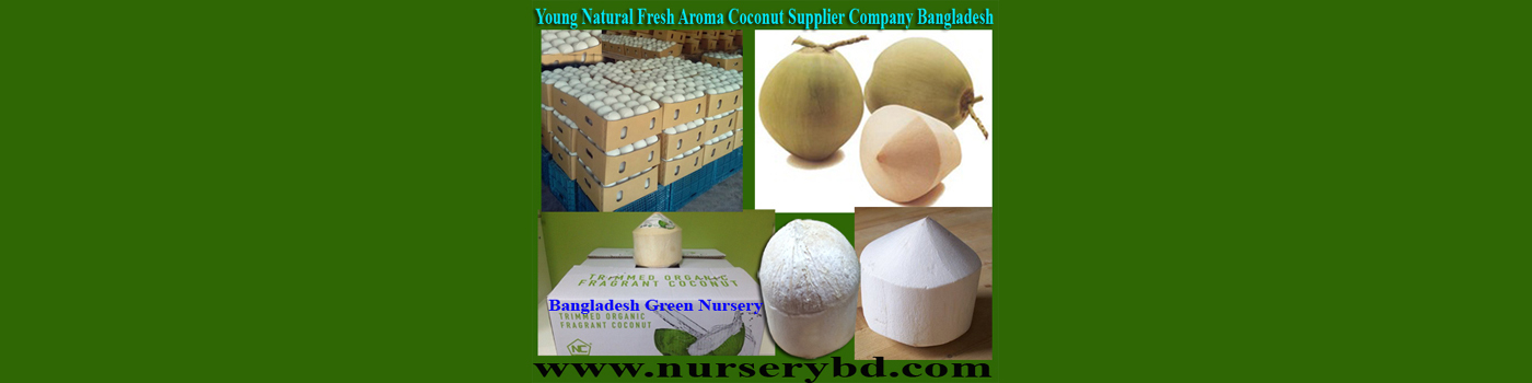 Vietnamese Coconut Tree Nursery in Bangladesh, Vietnamese Coconut Tree Manufacturer Nursery in Bangladesh, Vietnam Coconut Tree Manufacturer Nursery in Bangladesh, Vietnam Coconut Plant Manufacturer Nursery in Bangladesh, Bangladesh Hybrid Nursery & Seeds Company, Hybrid Coconut Seed Supplier Company in Bangladesh